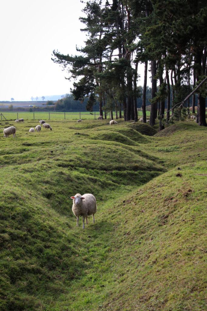 mouton memorial vimy