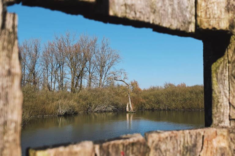 Marais du Warlet à Fretin